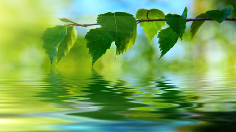 Umweltgedanke